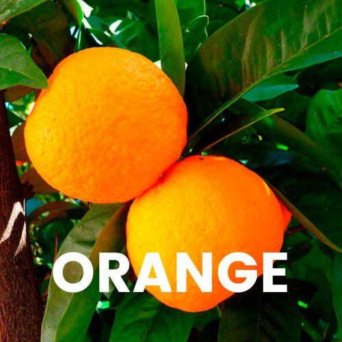 Aroma profissional - Orange