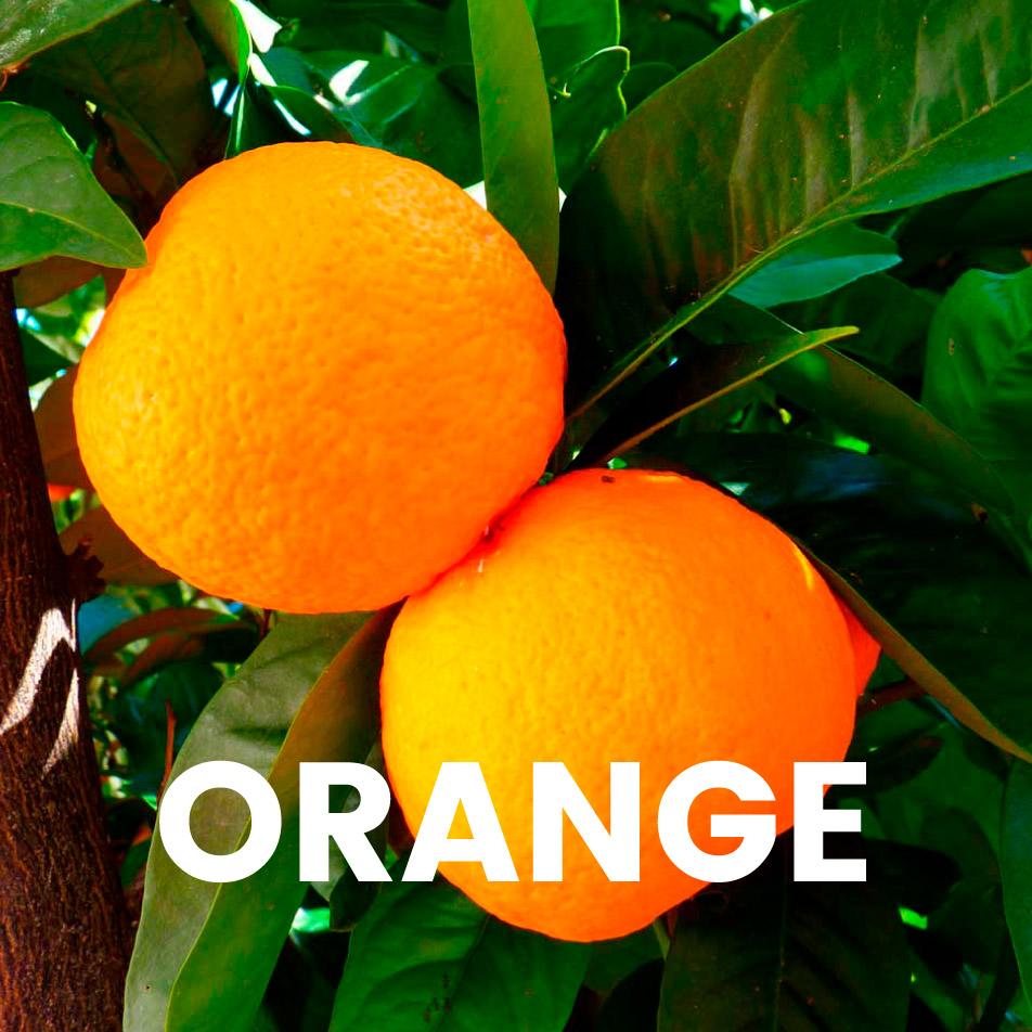 Aroma profissional – Orange