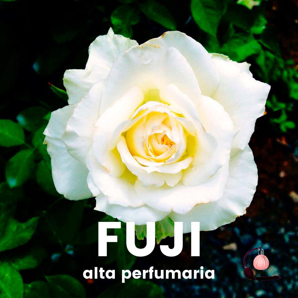 Perfume – Fuji
