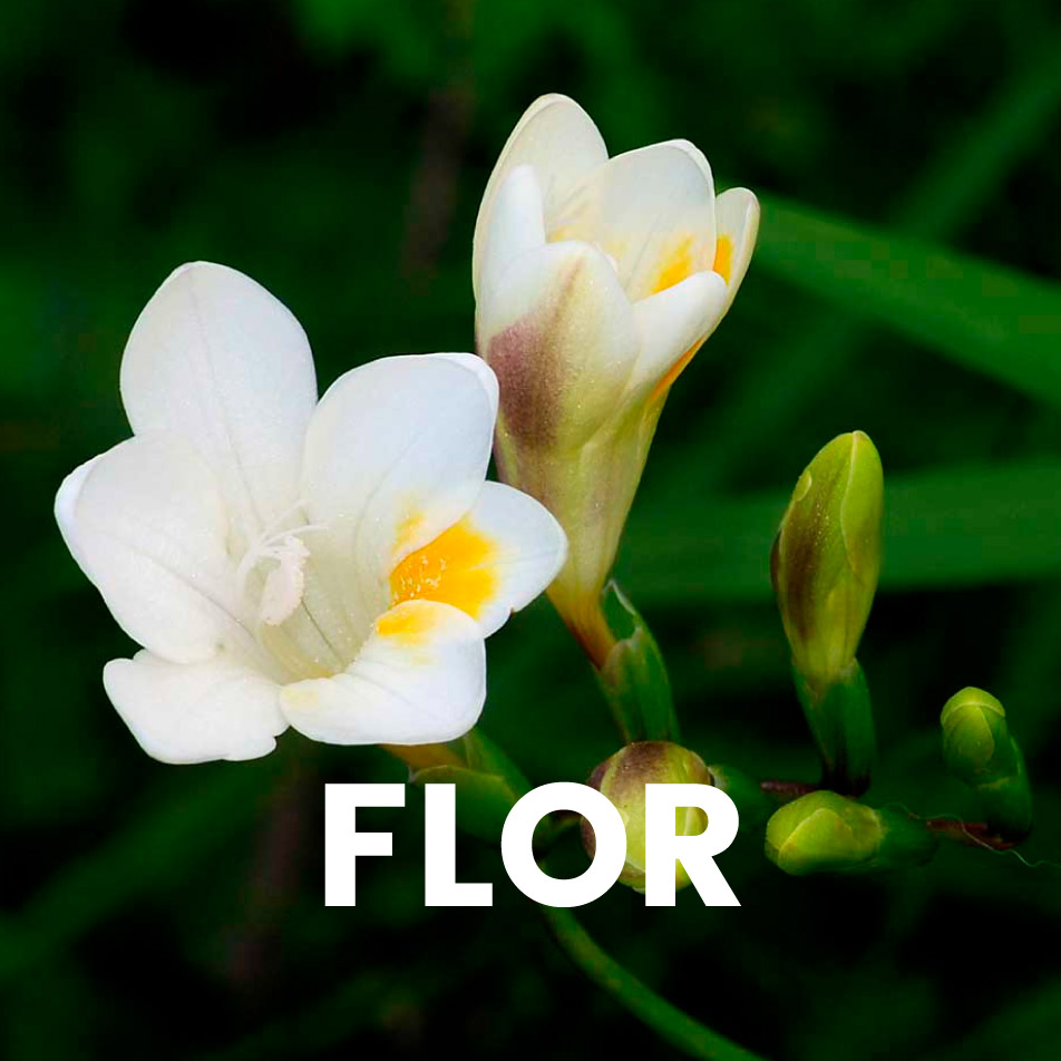 Aroma comercial – Flor