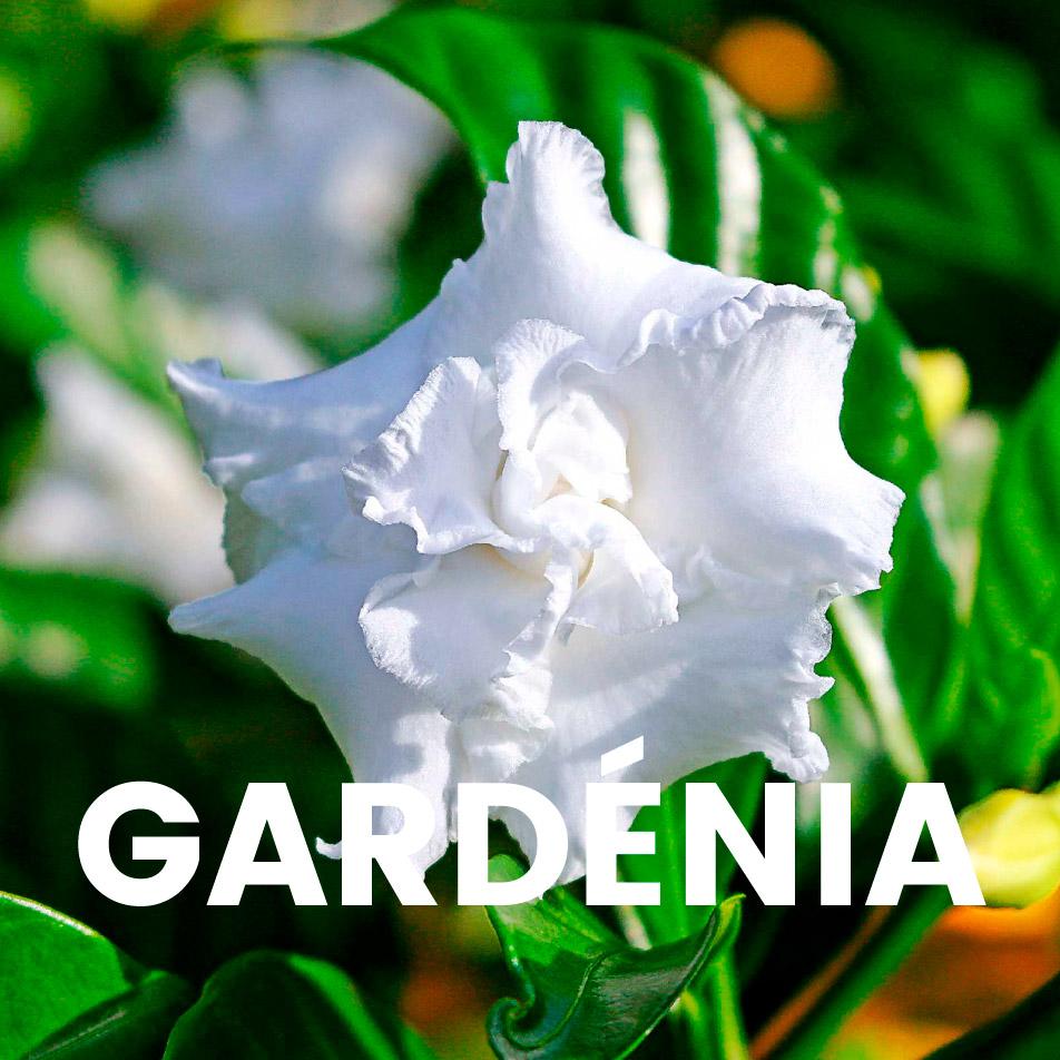 Aroma comercial – Gardénia