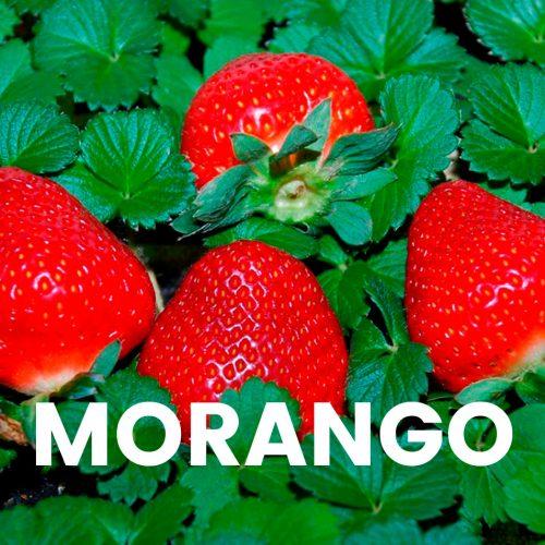 Aroma comercial - Morango